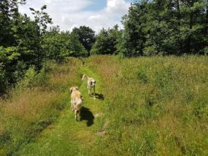 Weg durch Wiese mit Hunden